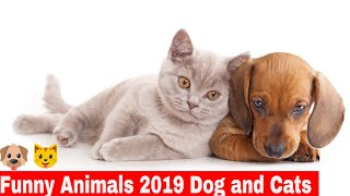 funny animals 2019 clean dog and cat Try not to Laugh #1