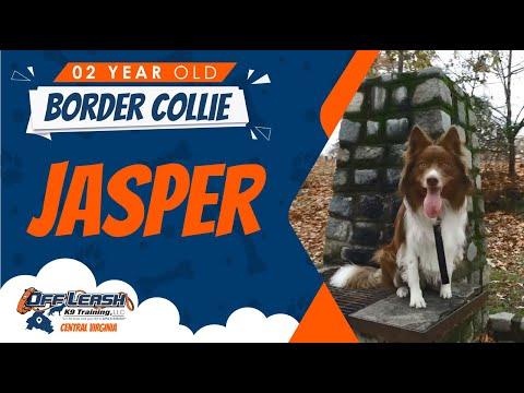 2 Yr Old Border Collie (Jasper) | Amazing Richmond Dog Trainers! | Dog Training Richmond Virginia