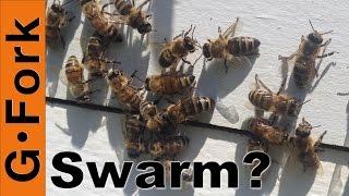 Swarm Traps and Honeybee Swarms, Beekeeping 101, GardenFork.TV