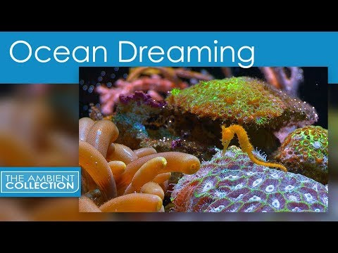 Relaxing Nature Scenes Of The Underwater World - Ocean Dreaming
