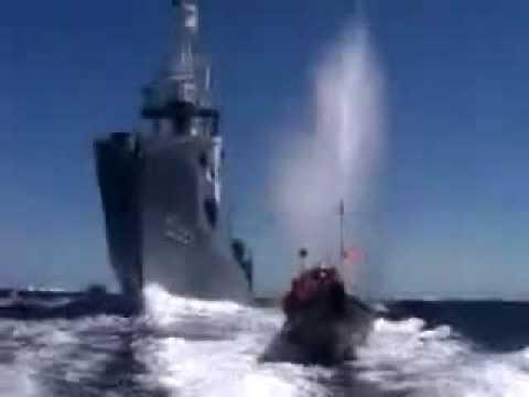 A sad anti-whaling video