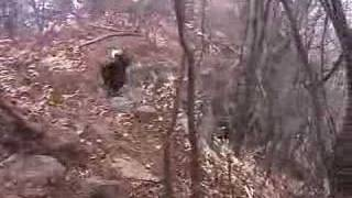 十一ヶ岳から十二ヶ岳への岩場を登るミディです.