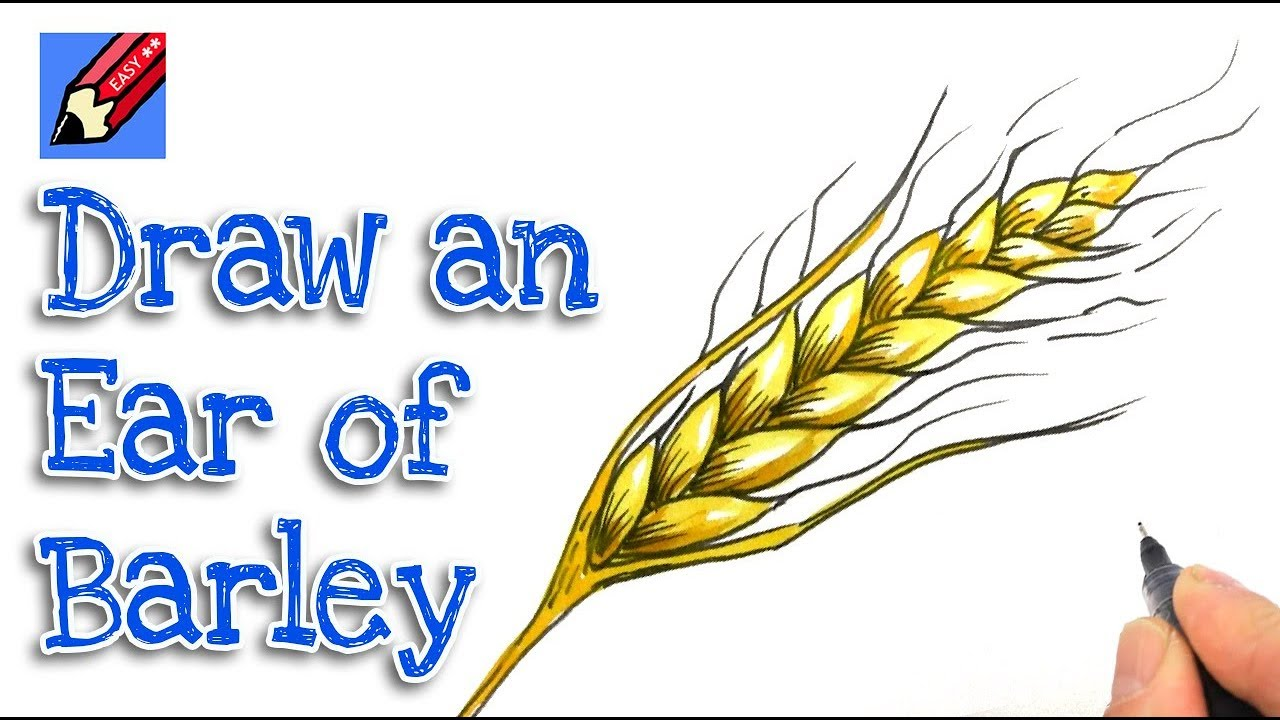 How To Draw An Ear Of Barley Real Easy Thanksgiving Youtube