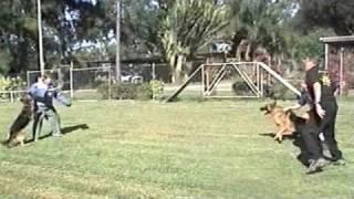 Dog Boarding Kennels Wacol Dog Watch Security Qld