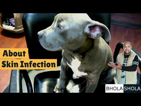 Pet Care – Cure Skin Infection – Bhola Shola