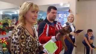 Пять лучших кошек на международной выставке в Пензе | WCF Penza Cats(Организаторы мероприятий, берите в аренду оборудование в компании