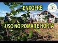 ENXOFRE CONTRA ACAROS E FUNGOS NA CASA SAL, 05, Plantar em Casa