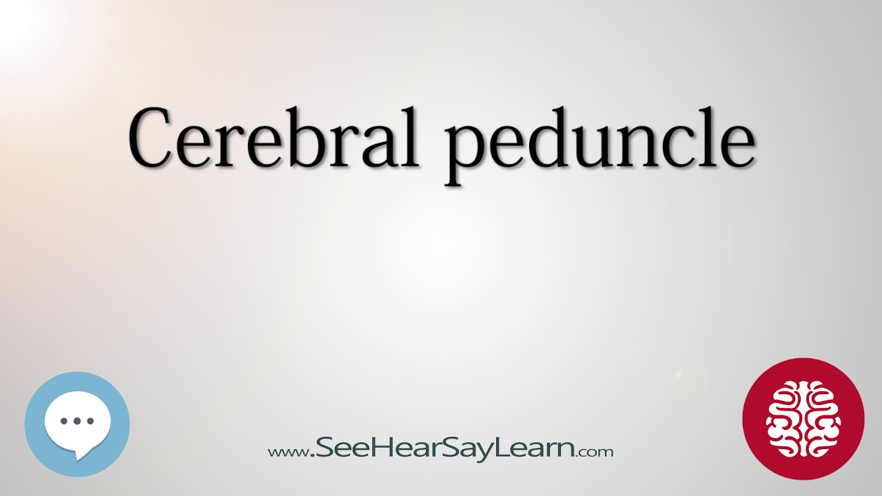 Cerebral peduncle Anatomy of the Brain SeeHearSayLearn 🔊 - YouTube