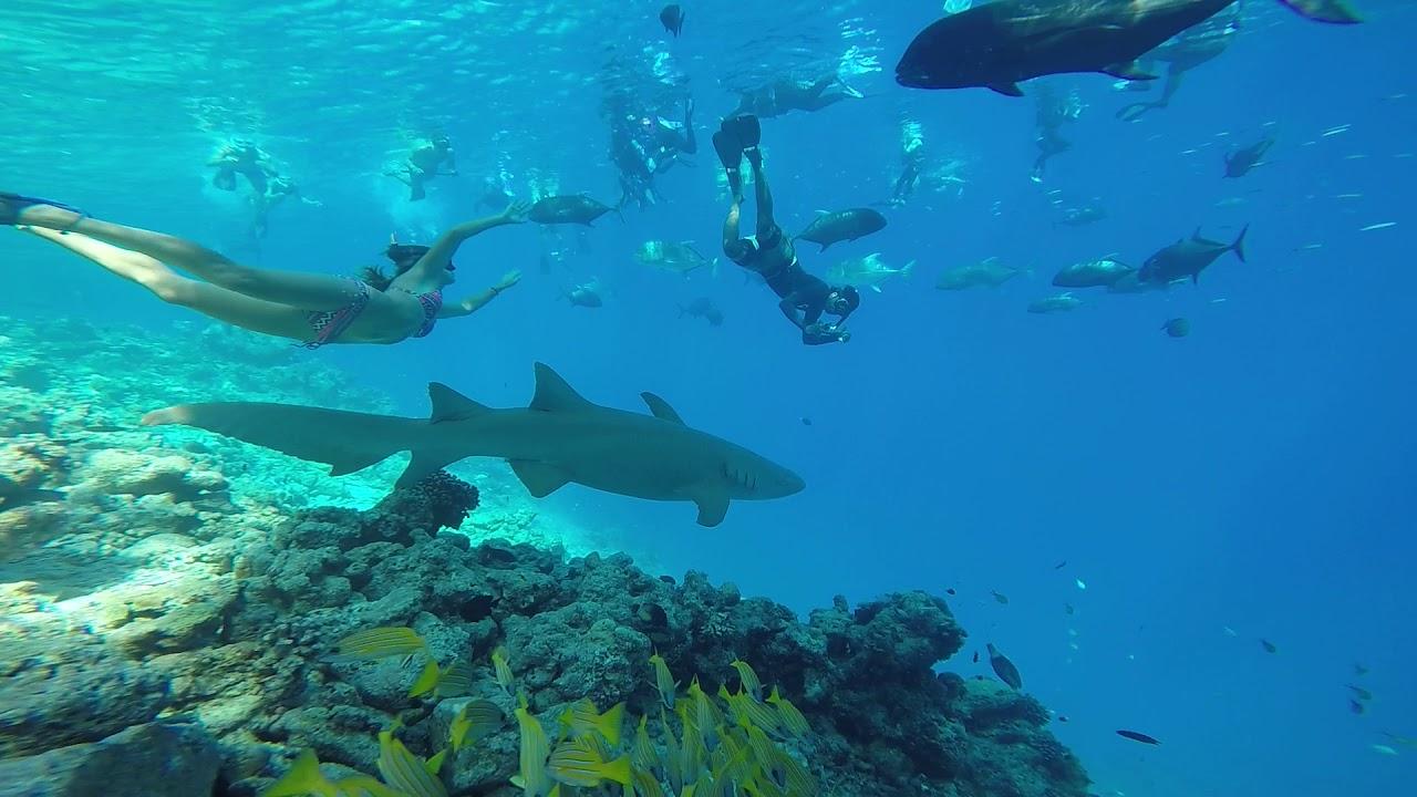 Kết quả hình ảnh cho nurse shark snorkeling maldives