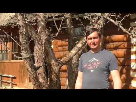 Зачистка коры у деревьев