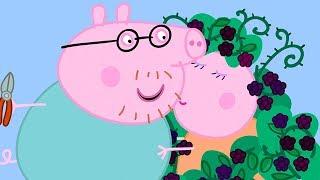 Peppa Pig en Español Episodios completos ❤️ LA ZARZA DE LAS MORAS  ⭐️Familia ⭐️ Pepa la cerdita