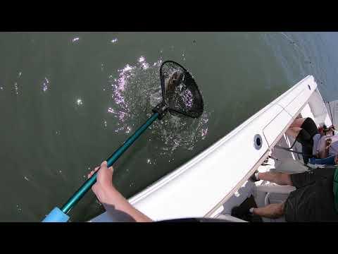 June 8th 2020 Wachapreague, Virginia Flounder Fishing