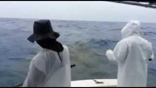 A good day of Yellowtail Fishing