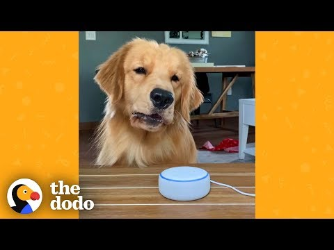 Dog Finds Out What Other Animals Sound Like And Is Not Impressed | The Dodo