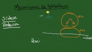 penicillin and transpeptidase