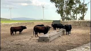 VOX visita la ganadería Cebada Gago para apoyar al sector de la tauromaquia
