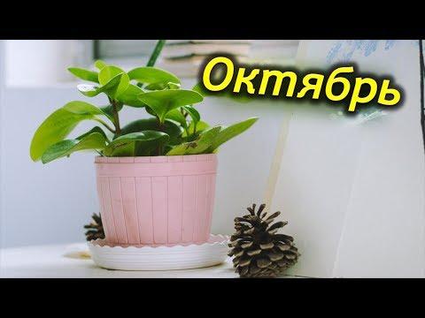 ОКТЯБРЬ – важные сезонные роботы с комнатными растениями.