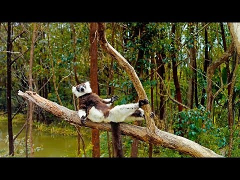 Island of Lemurs: Madagascar - TV Spot 2 [HD]