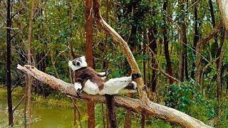 Island of Lemurs: Madagascar - TV Spot 2 [HD]
