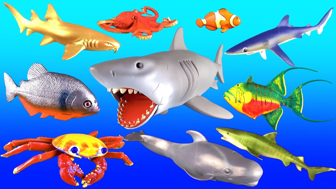 Giant shark whales fish kids surprise toy collection for Fish facts for kids