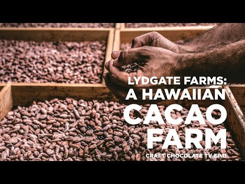 Lydgate Farms: A Hawaiian Cacao Farm - Episode 11 - Craft Chocolate TV
