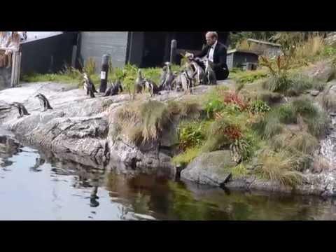 Вопрос: Какой самый известный пингвин в Норвегии Почему?