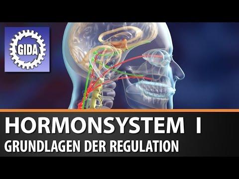 GIDA - Hormonsystem I - Grundlagen der Regulation - Biologie - Schulfilm -  DVD (Trailer)