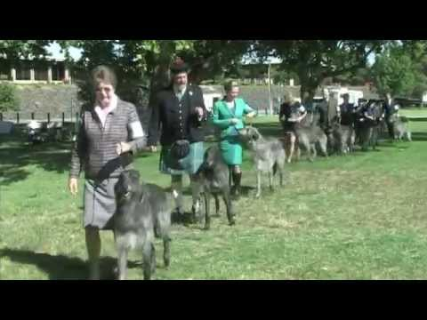 The 2014 Scottish Deerhound National Specialty!