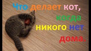 Что делает кот ,когда никого нет дома ?