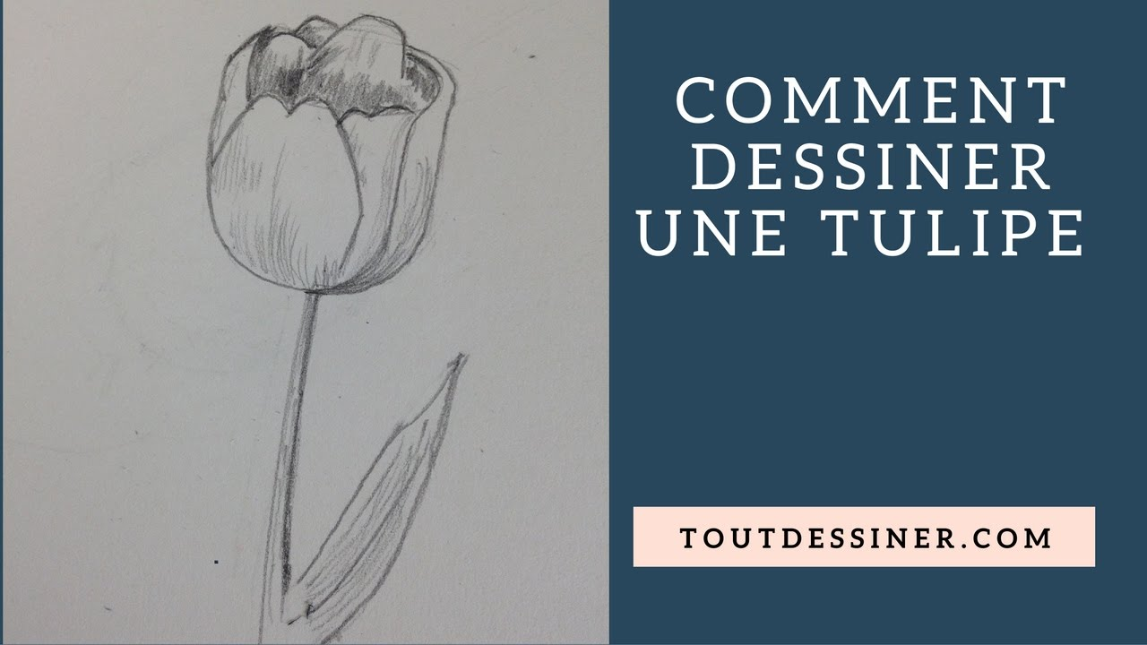 comment dessiner une tulipe tutoriel de dessin youtube. Black Bedroom Furniture Sets. Home Design Ideas