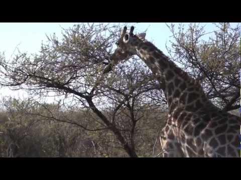South Africa 2011 - Luxury Bridge Holidays