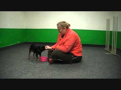 Pozitivní motivace v psí škole Vychovaný pes