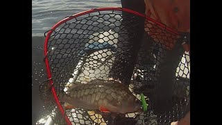 Открытие лодочного сезона на Рыбинском водохранилище Ловля окуня Крупный окунь на вибы