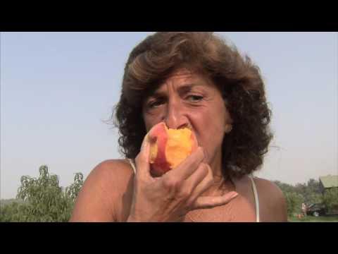 Pick Peaches, Farm to Fork, Starwberry, Tropical, Market - America's Heartland