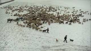 Winternomaden - Kinotrailer