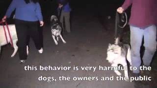 Huskies Out Of Control-solid K9 Training