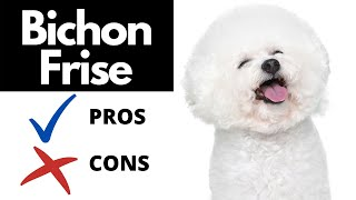 Bichon Frise Pros And Cons | The Good AND The Bad!!