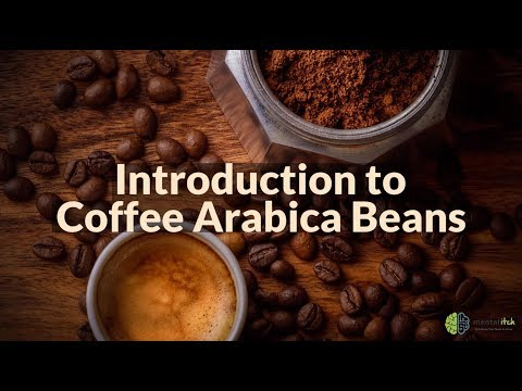 Introduction To Coffee Arabica Beans