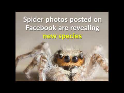 Spider photos on Facebook are revealing new species