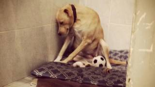 News Update Lana, the world's 'saddest dog', needs another home 11/05/17