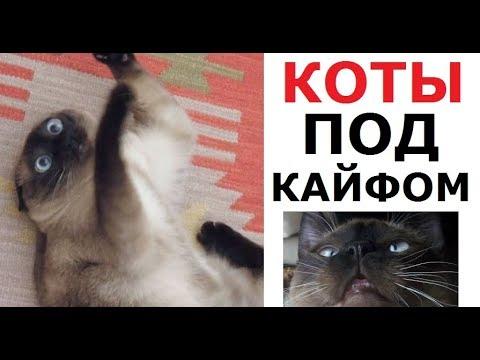 Лютые КОТЫ-АЛКАШИ. Обожрались