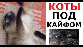 Лютые КОТЫ-АЛКАШИ. Обожрались кошачьей мяты и ловят кайф