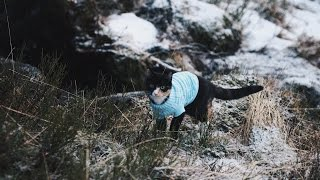 Cat in Sweater and Leash - Emma The Cat