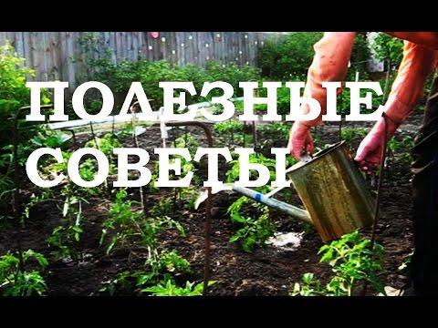 огород без хлопот полезные советы дачникам