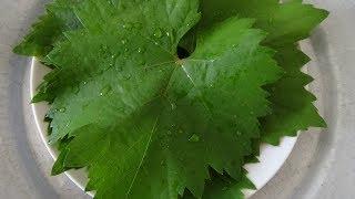 Как замораживать виноградные листья для Сарма, Голубцов, Долма, Толма