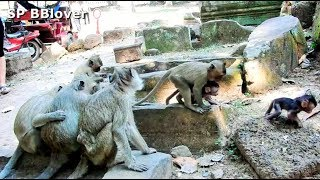 Karri Really Love Baby Monkey - SP BBlover - Her Favorite Hold Baby