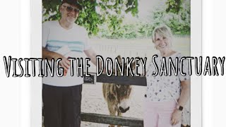 VISITING THE DONKEY SANCTUARY IN CORK!   THAT STABLE LIFE