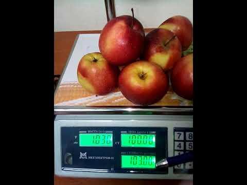 Весы торговые ВР 4900 со стойкой