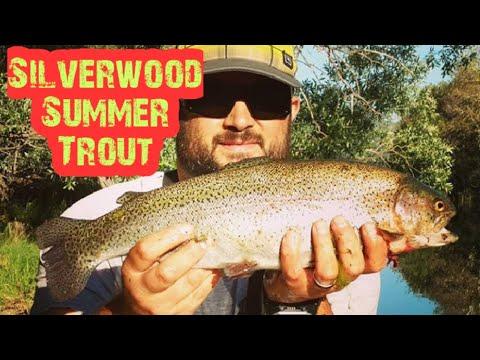 Summer Trout Fishing Silverwood Lake,CA 2019