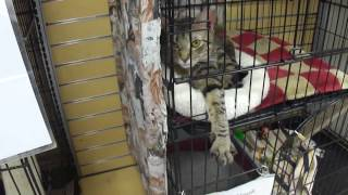 sweet cats for adoption in river oaks houston area